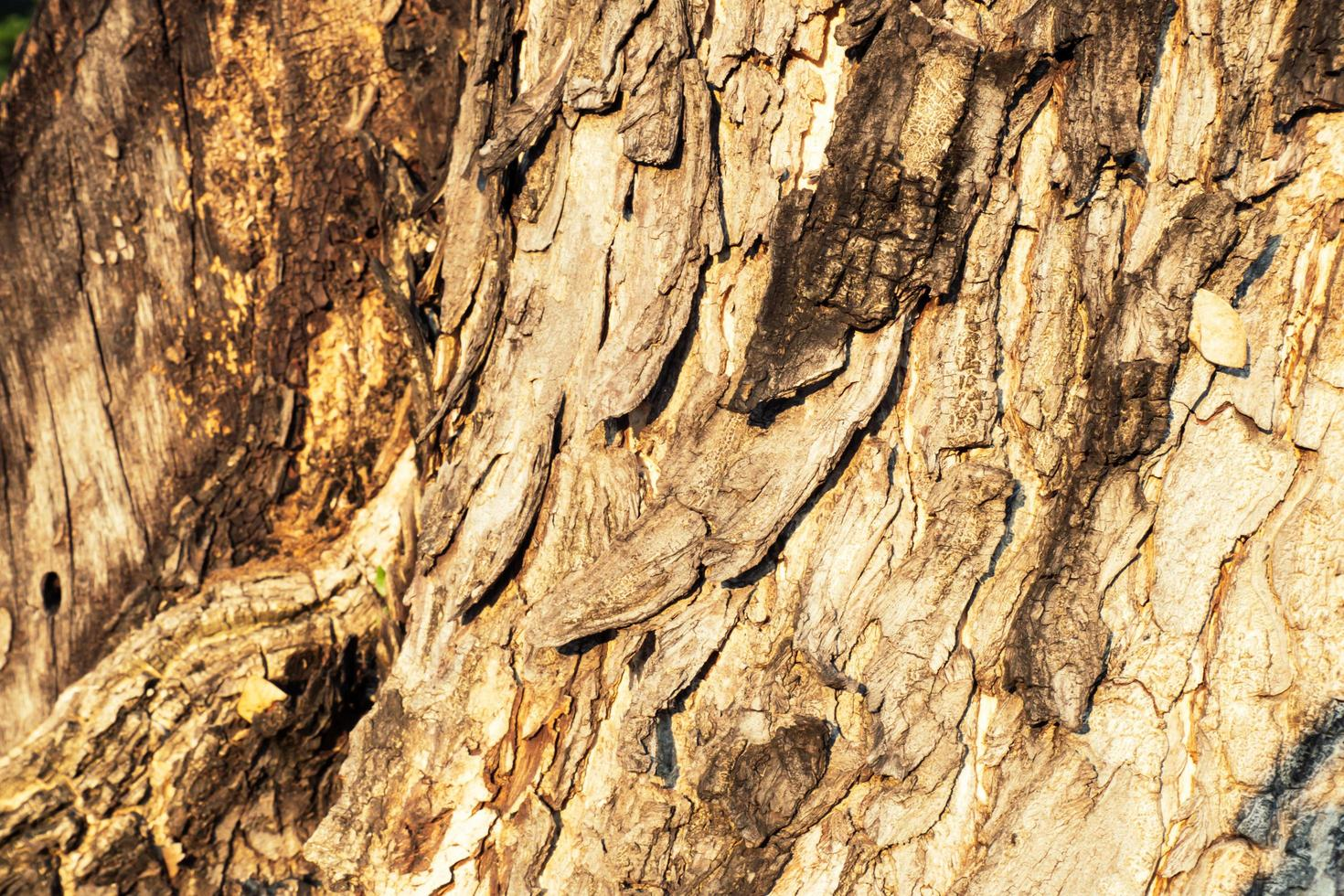 fondo de corteza de árbol foto