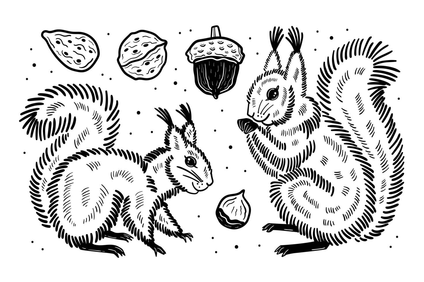 Forest set of elements. Squirrels acorn nut seed. Black ink vector design.