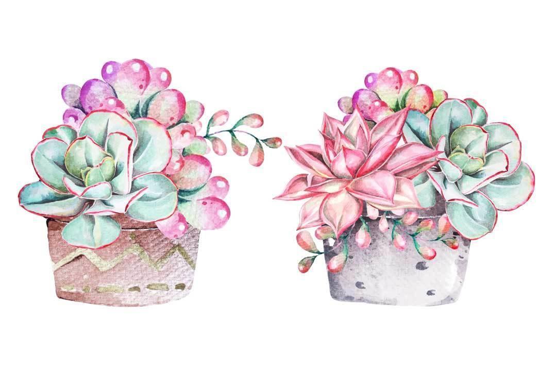 Watercolor succulents set vector