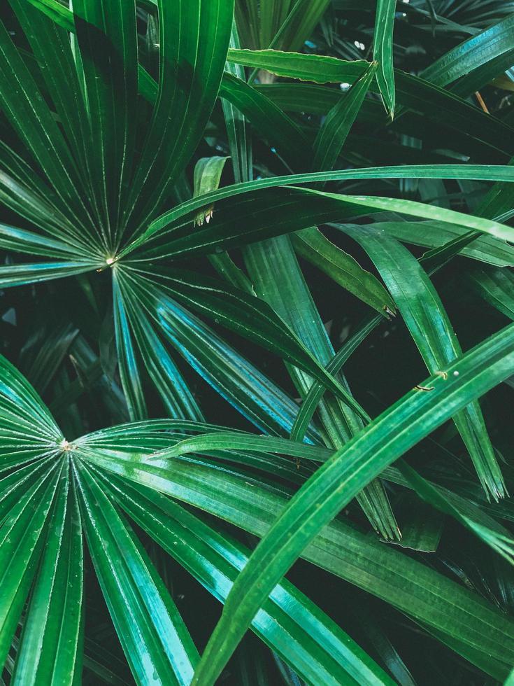 Vegetación verde en un jardín tropical. foto