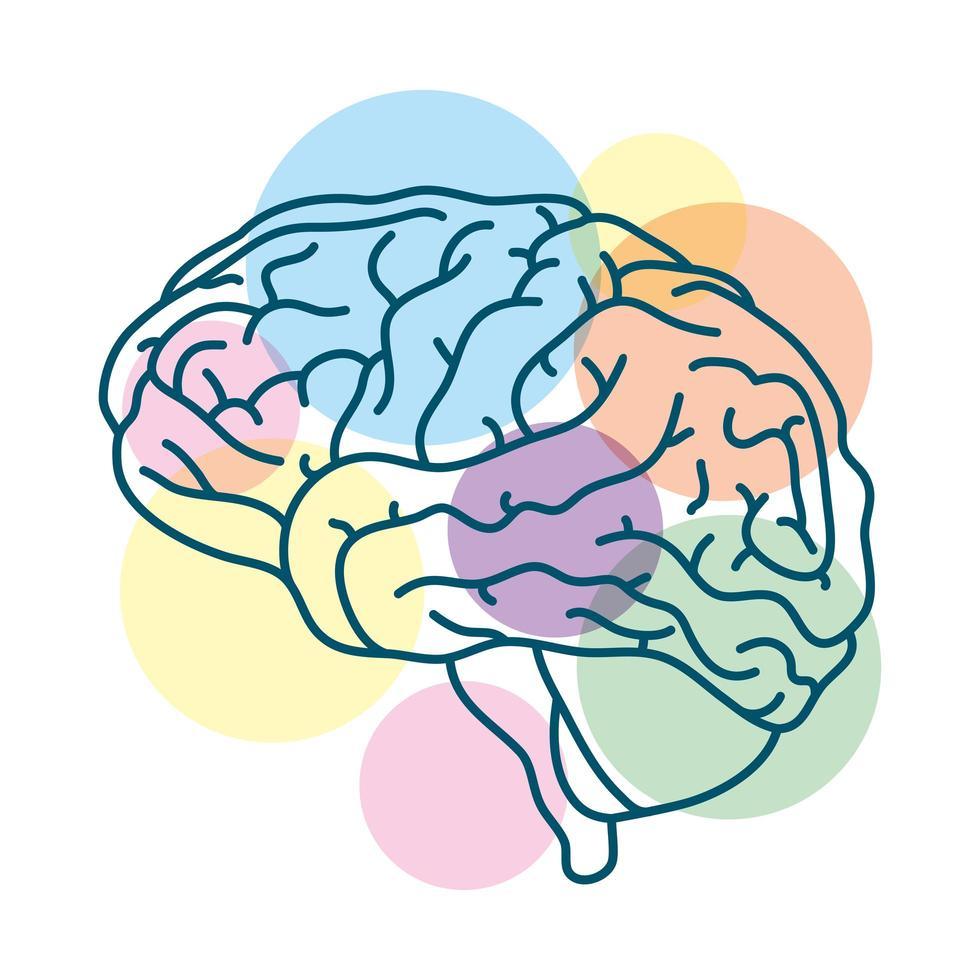 cerebro humano con círculos de colores vector