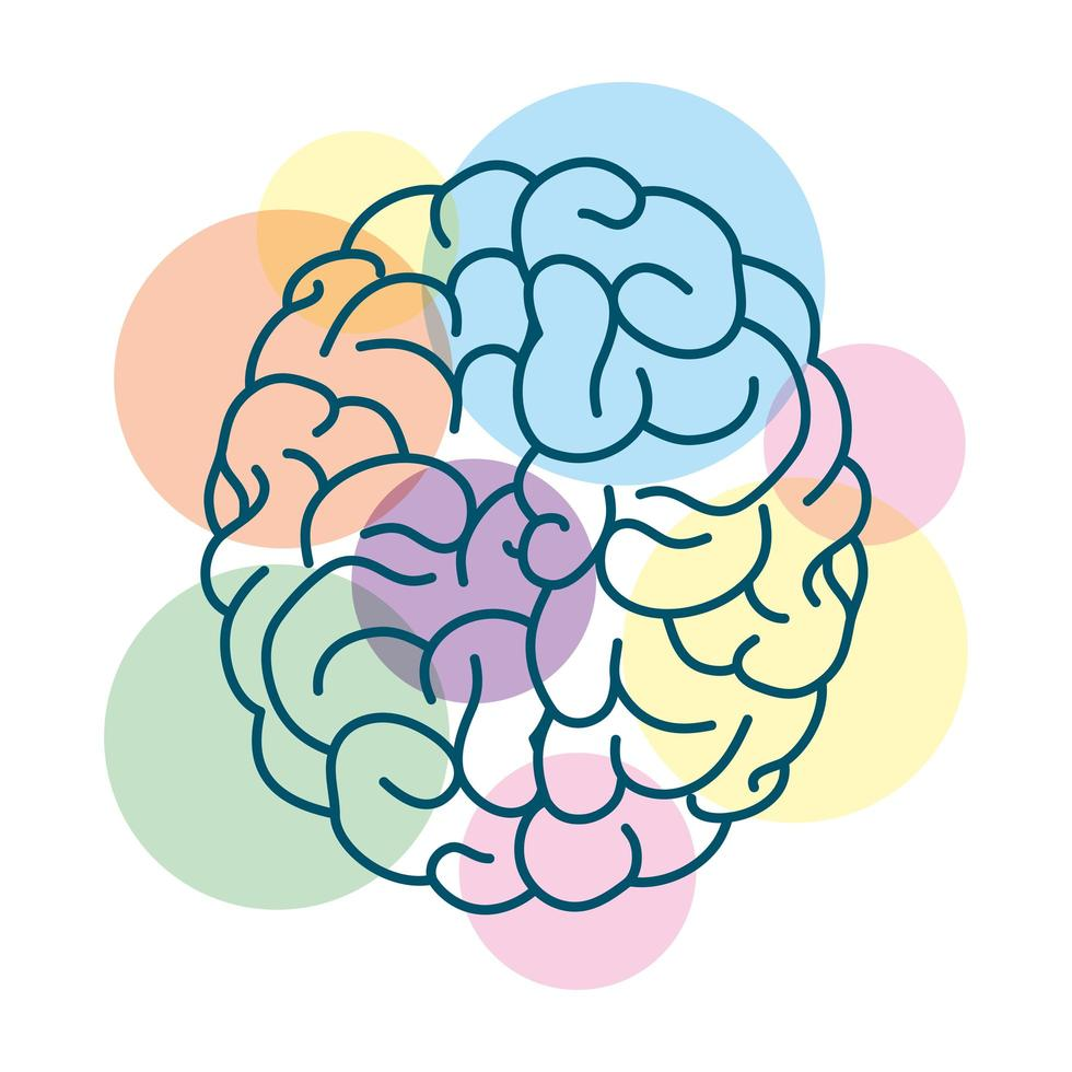 human brain with colored circles vector