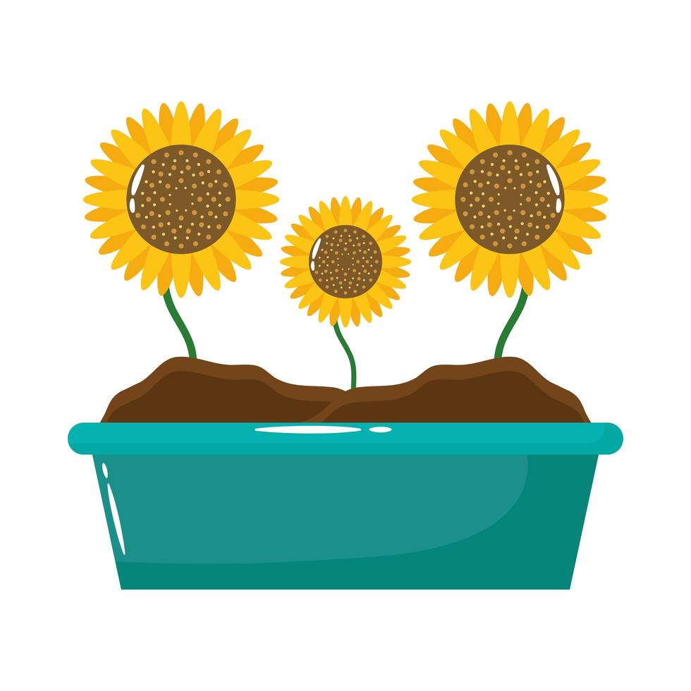 sunflowers in planter flat style icon vector