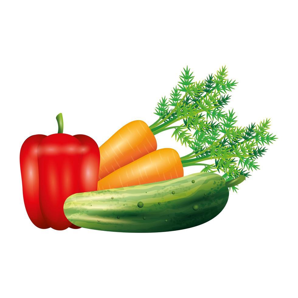 diseño de vector vegetal de pepino y zanahoria de pimiento