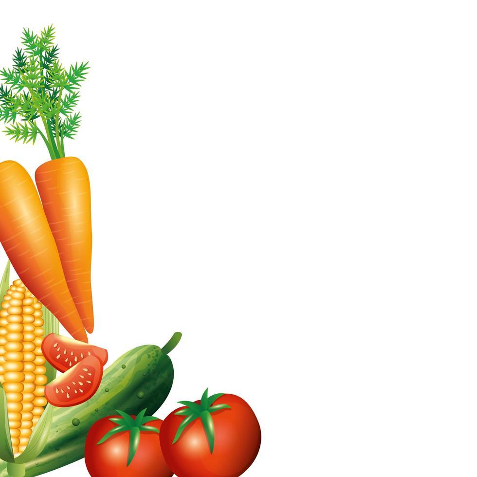 zanahoria maíz pepino y tomate diseño vectorial vector