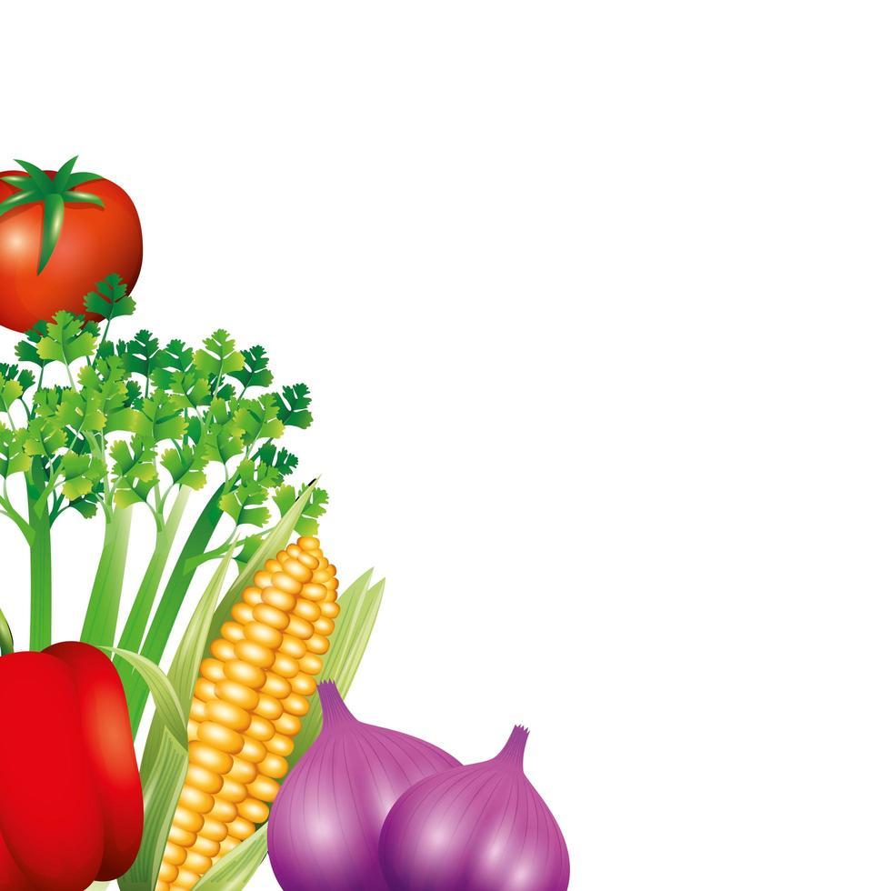 apio tomate pimiento maíz y ajo diseño vectorial vector