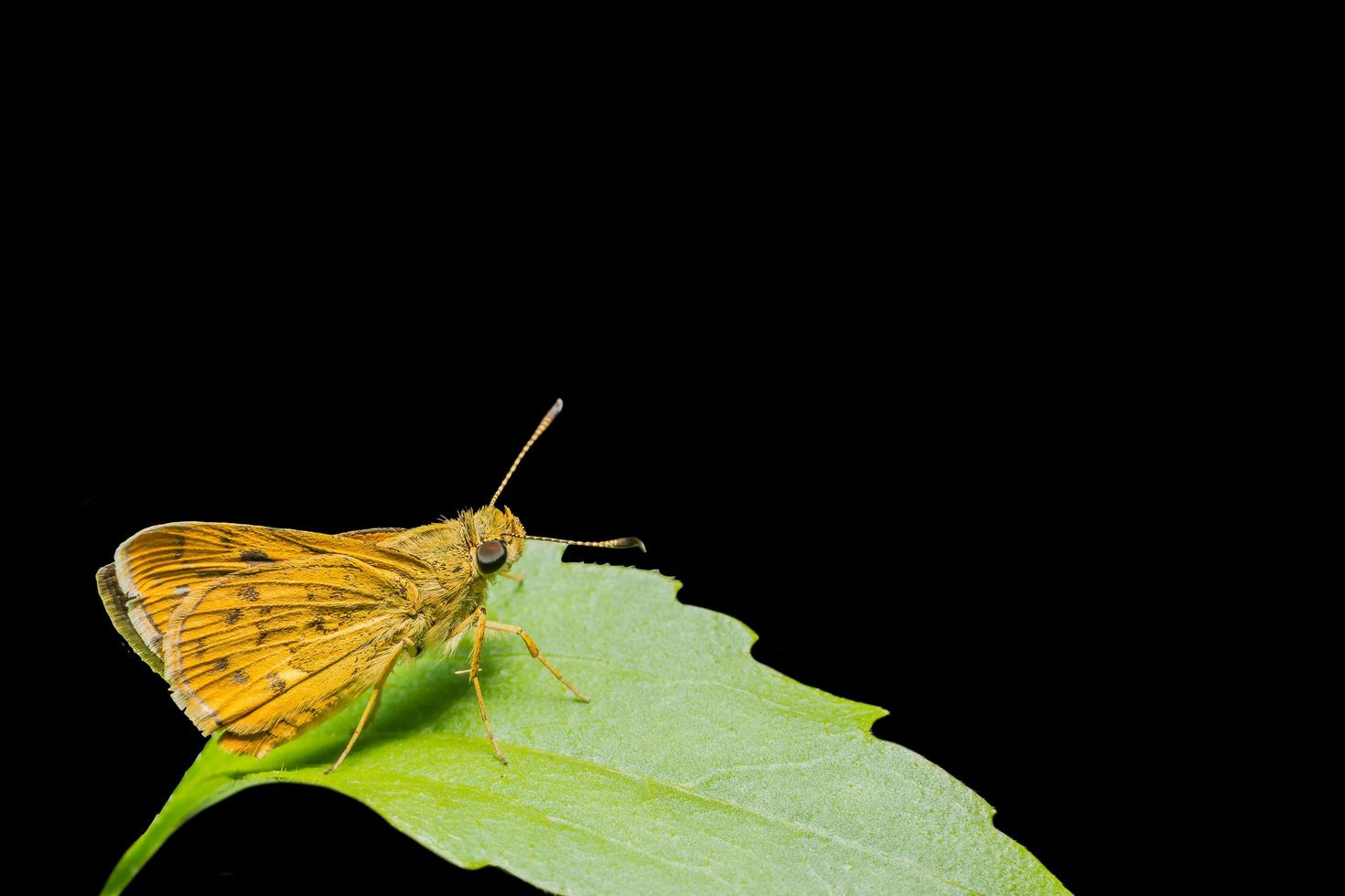 Yellow butterfly on a leaf photo