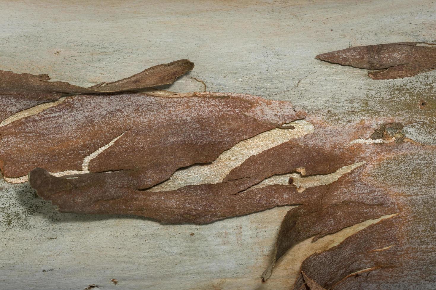 Bark surface background photo