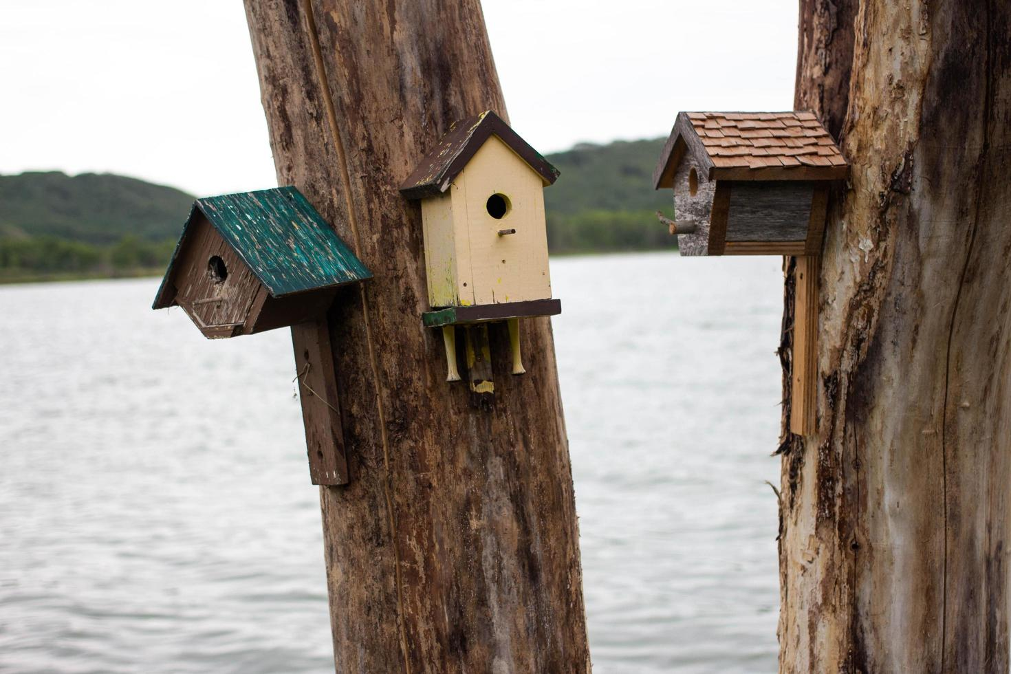 Birdhouses by the lake photo