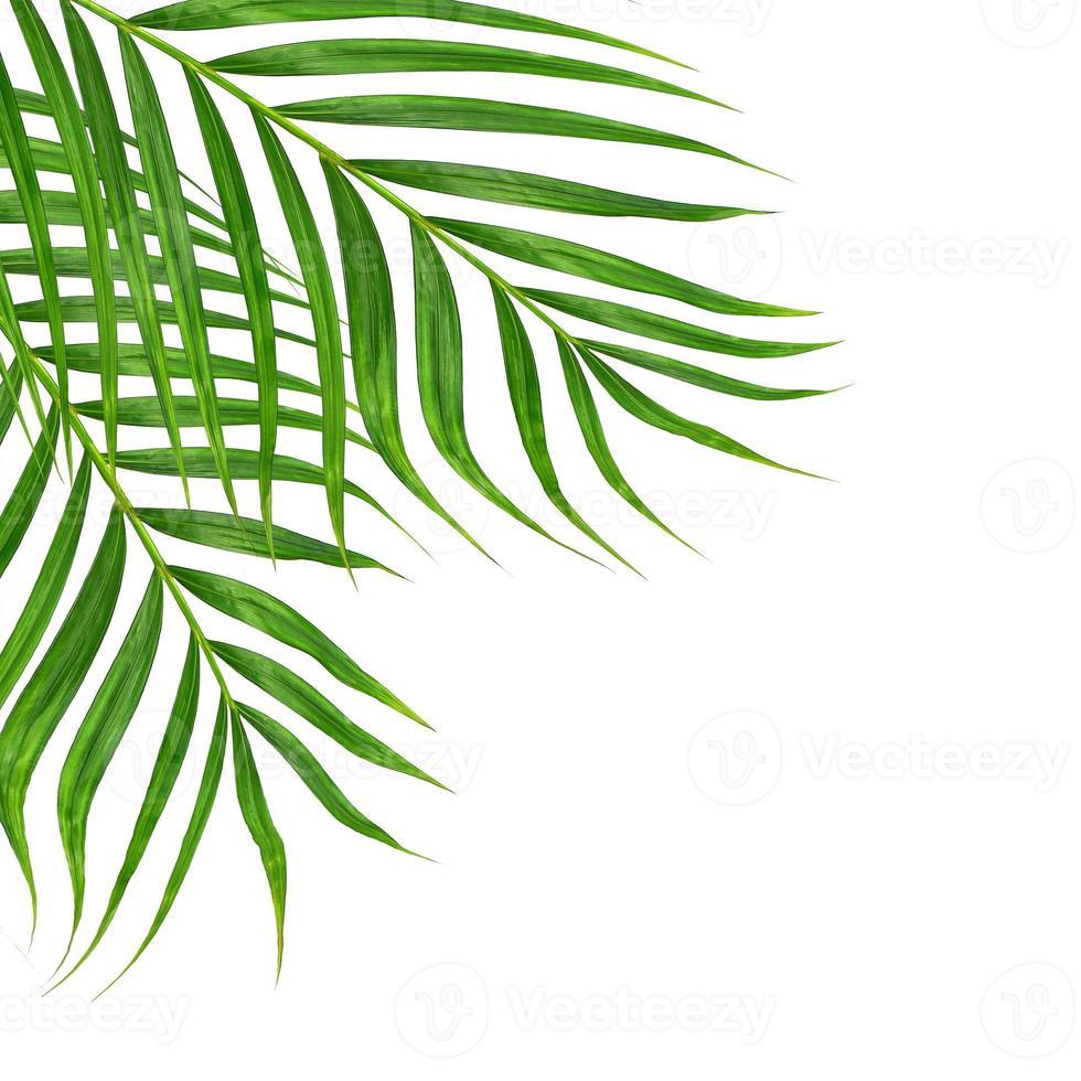 dos hojas de palma sobre un fondo blanco foto