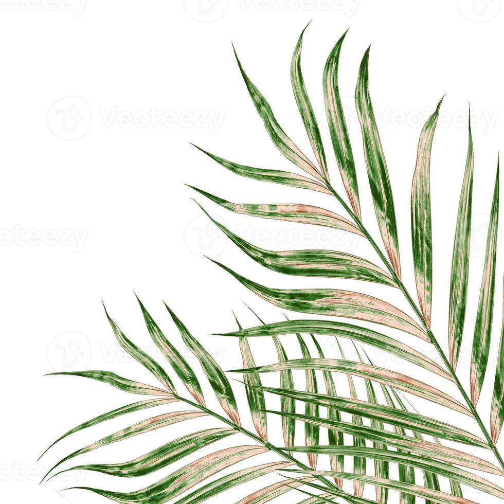 hojas verdes y marrones foto