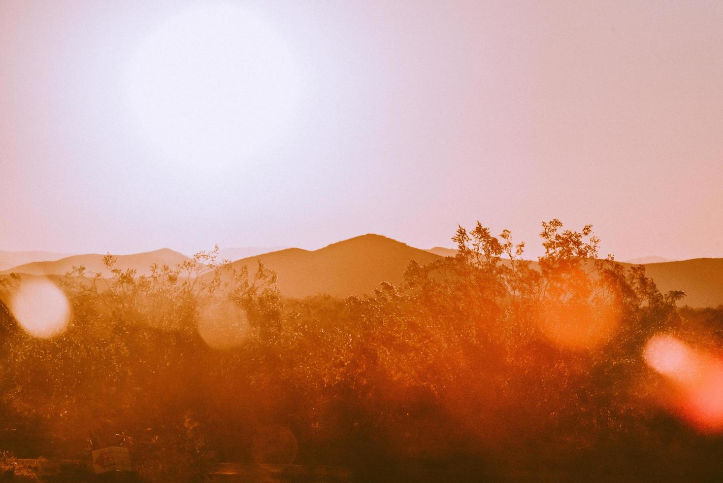 Brown trees and mountains during sunset photo