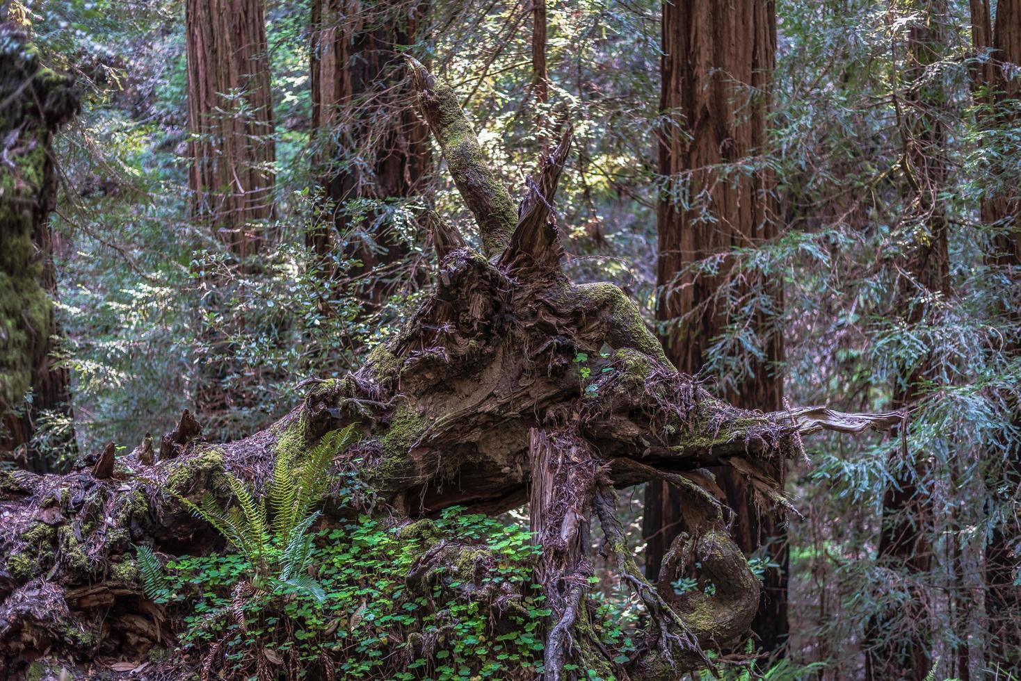 tronco de árbol marrón rodeado de plantas verdes foto