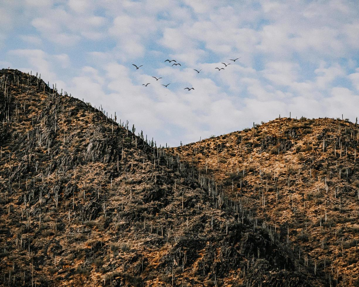 flock of birds flying over the mountain during daytime photo