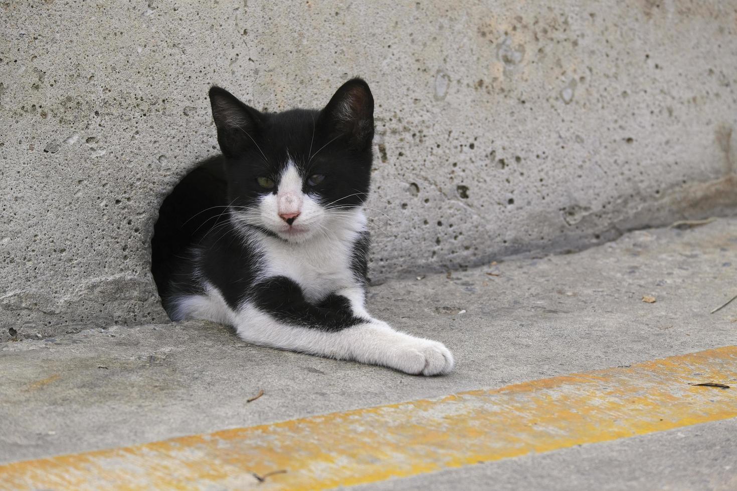 gatito acostado en un agujero de la pared de hormigón foto