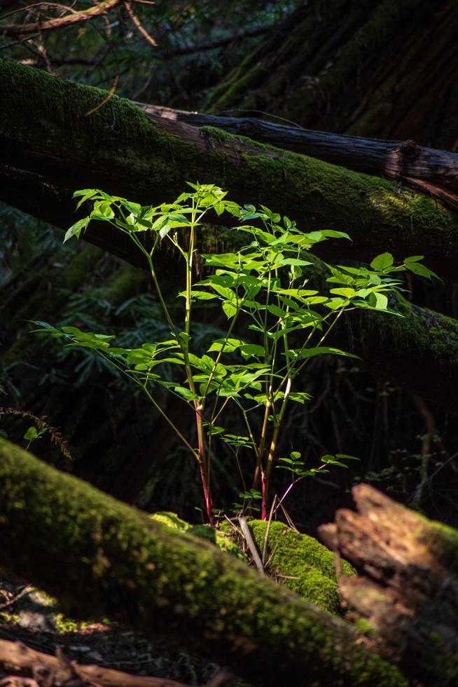 hojas verdes en el tronco de un árbol marrón foto
