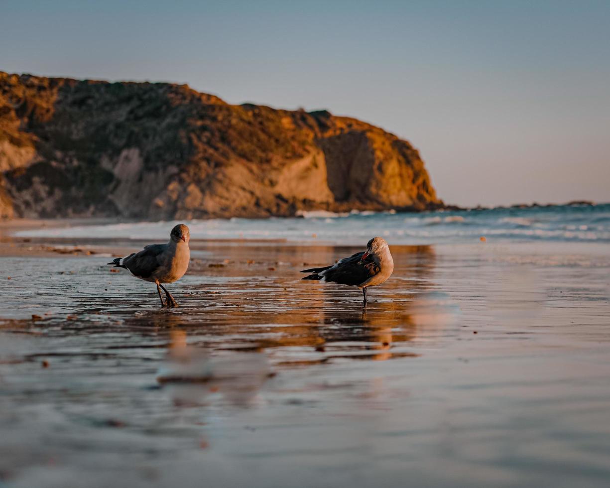 Three birds on shore during daytime photo