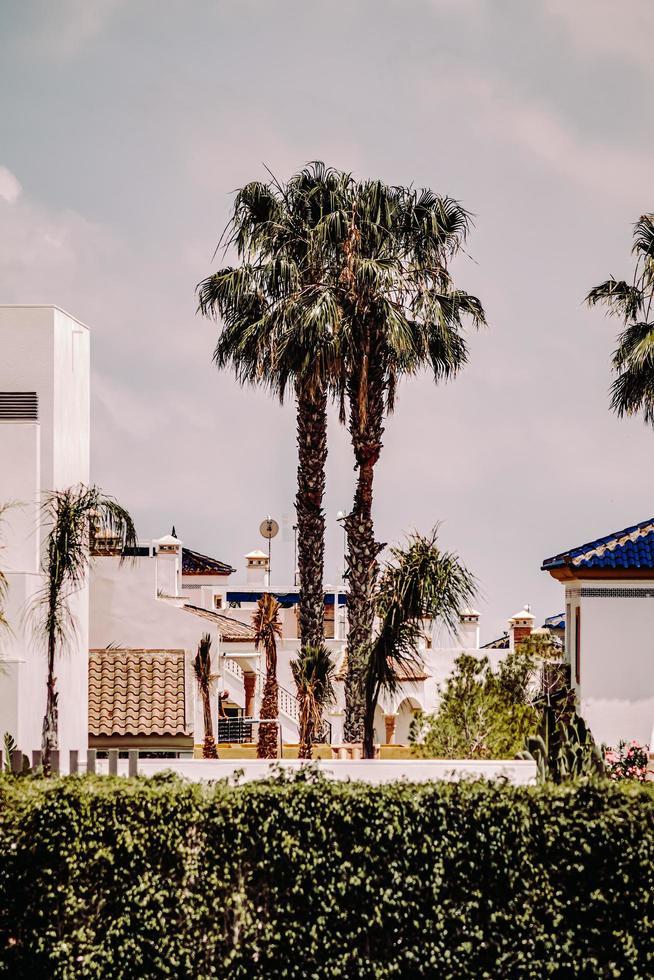 Orihuela, España, 2020 - Palmera verde cerca del edificio de hormigón marrón durante el día foto