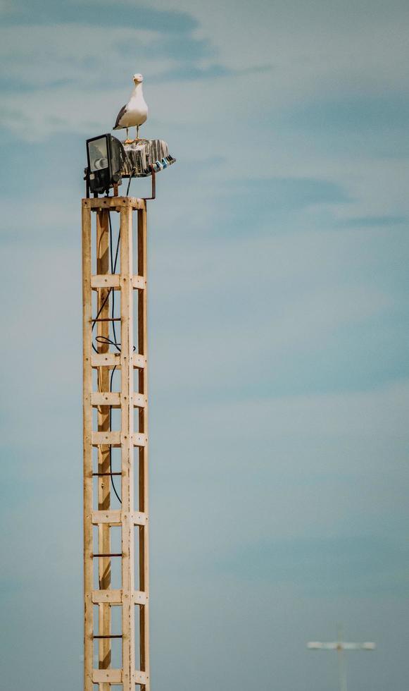 torre de metal blanco y negro foto