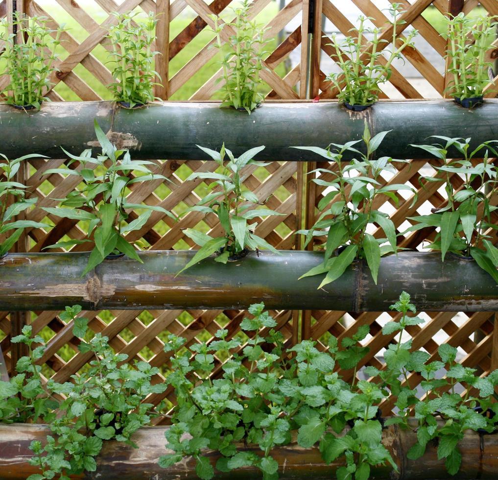 verduras huerta vertical foto