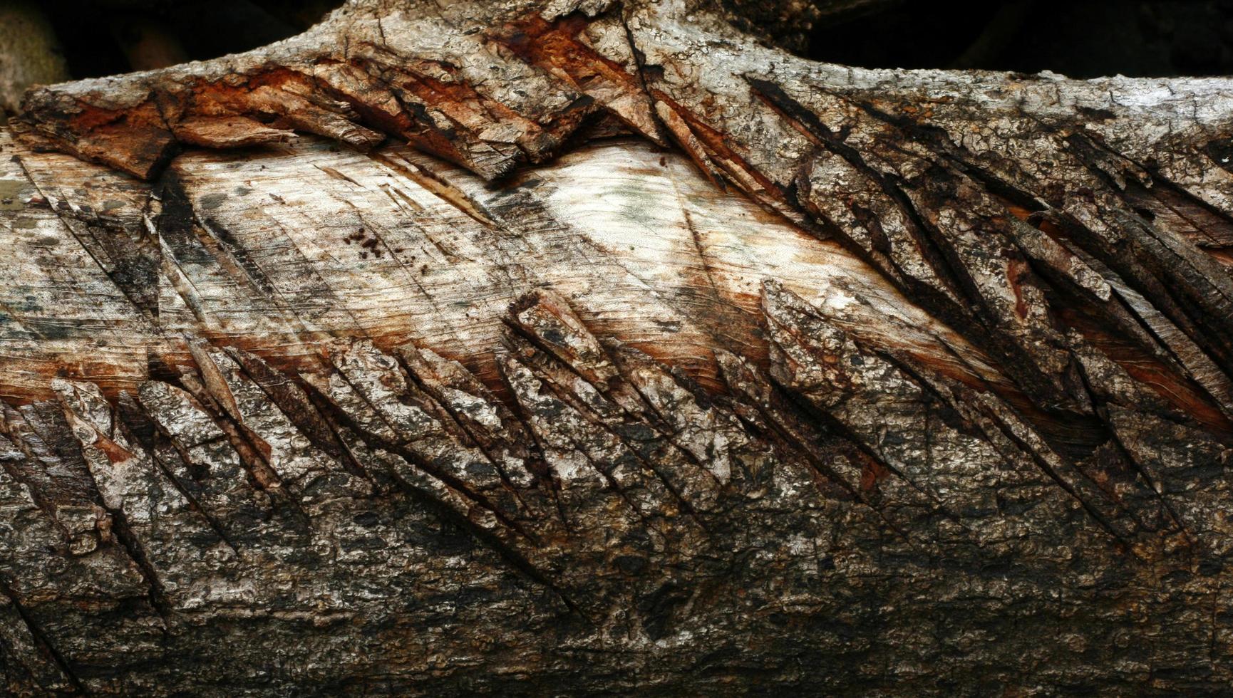 troncos de madera con muescas foto