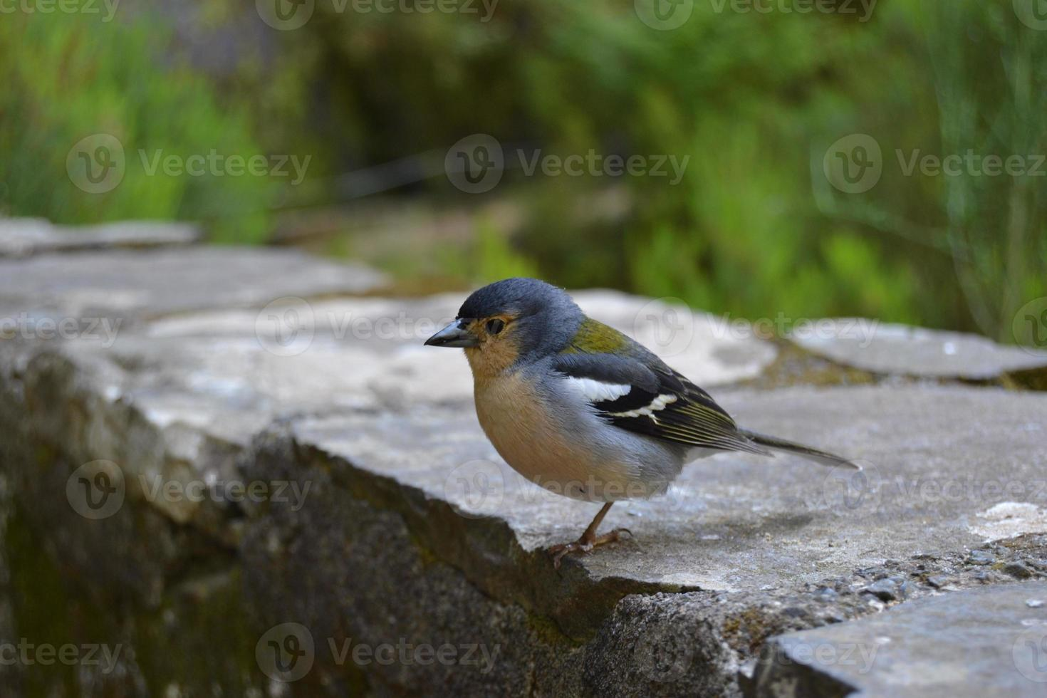 Nice little bird in the forest photo