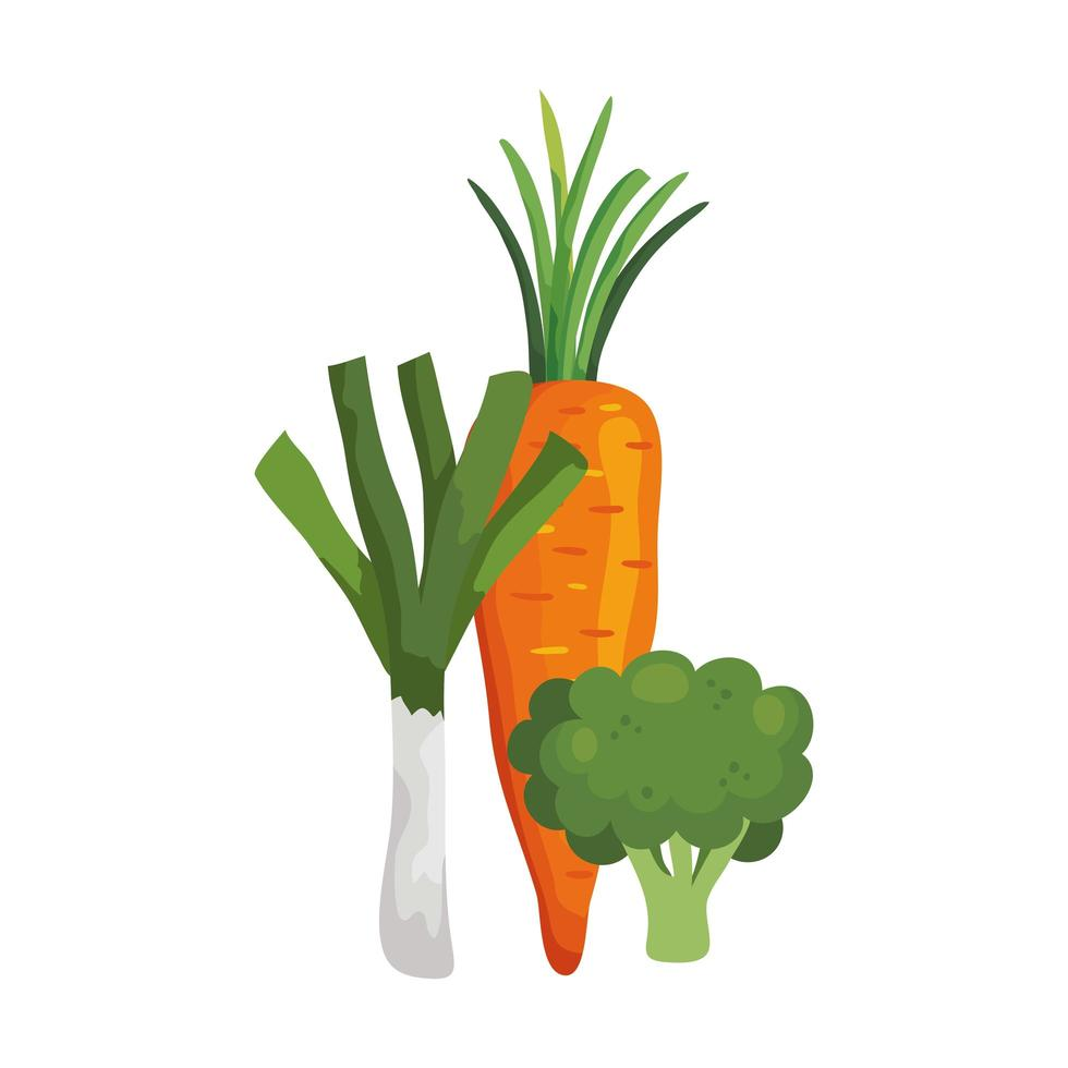fresh carrot with leek and broccoli vector