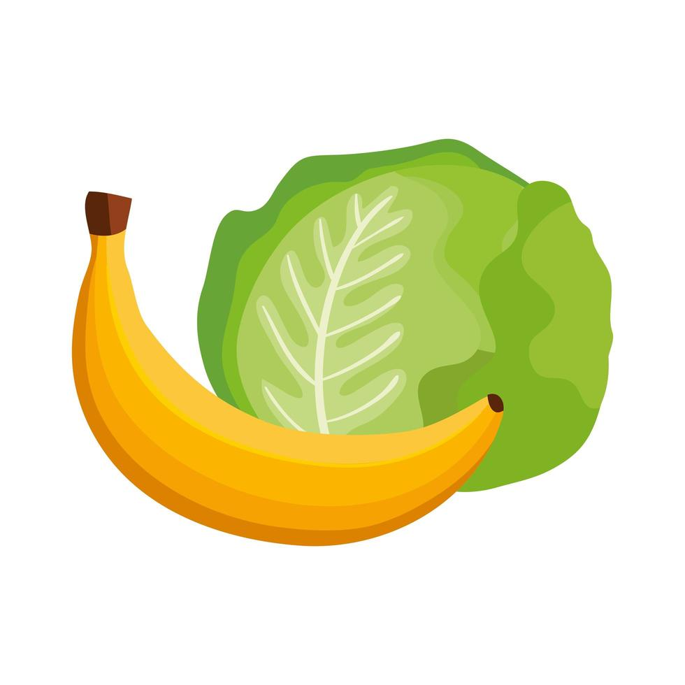fresh lettuce with banana isolated icon vector