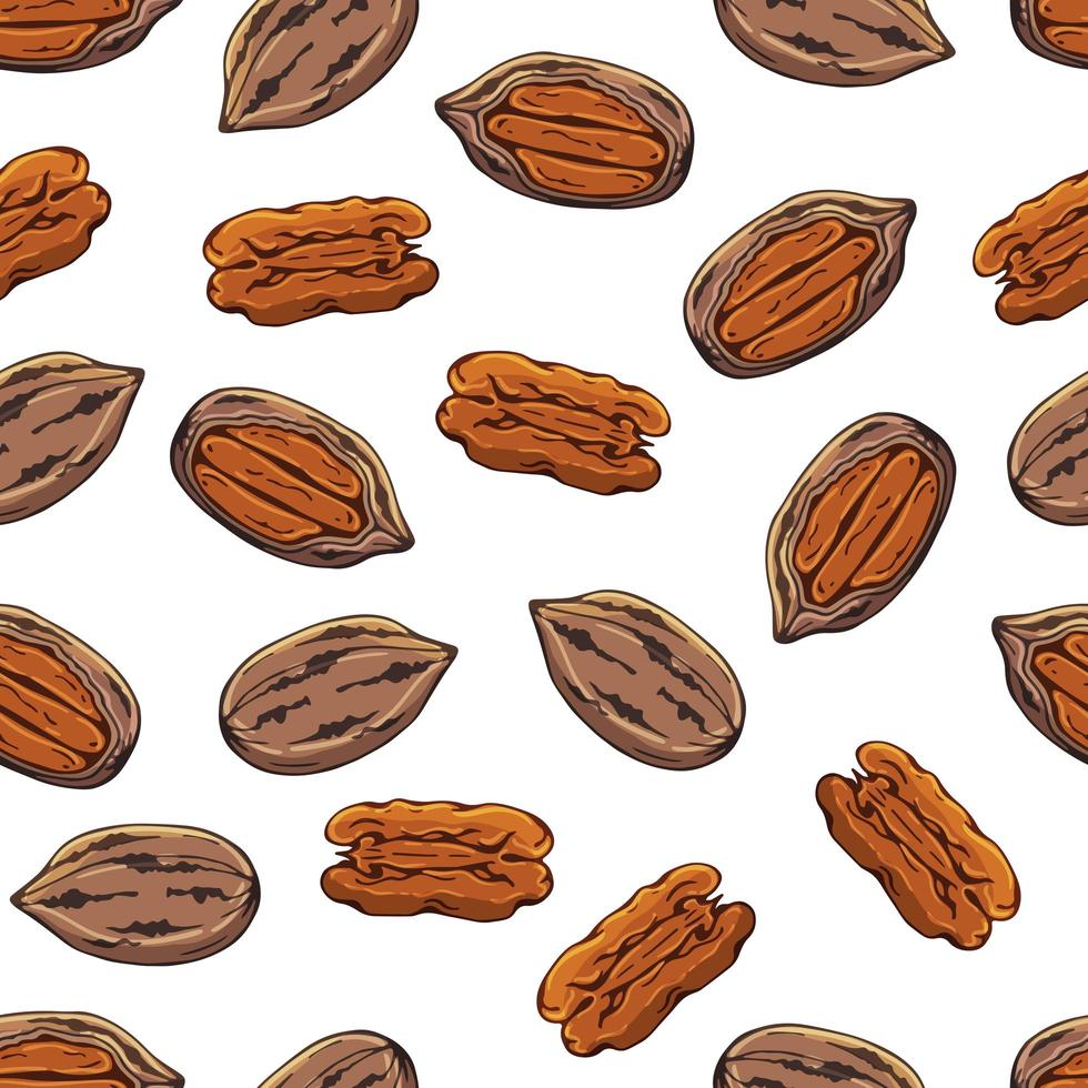Pattern of vector illustrations on the nutrition theme set of pecans. Realistic isolated objects for your design.