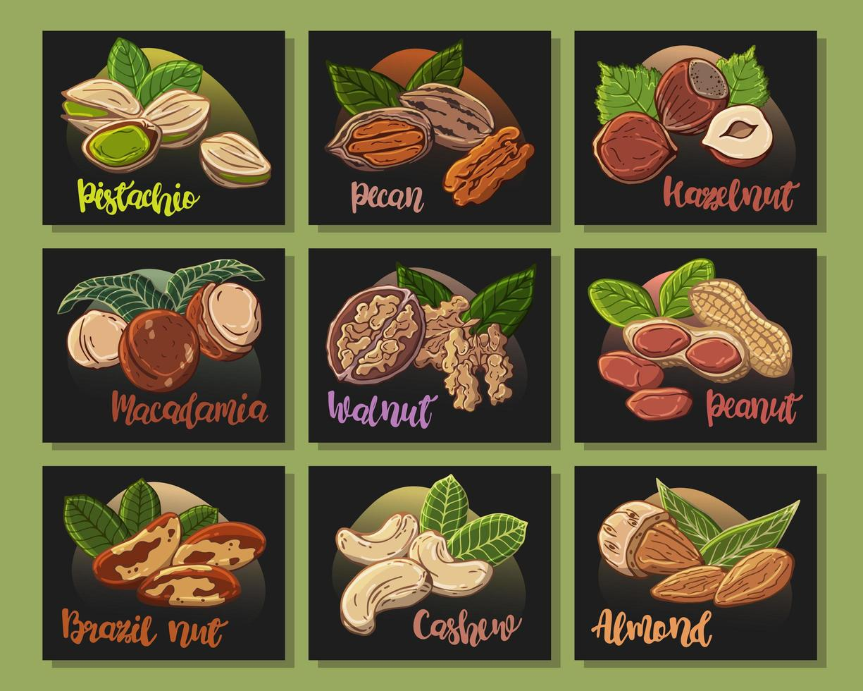 Vector colorful illustrations on the nutrition theme set of different kinds of nuts. Stickers for your design.
