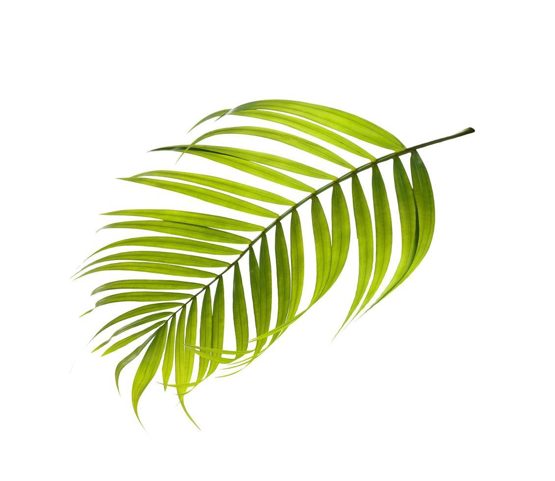 Single green leaf on white background photo