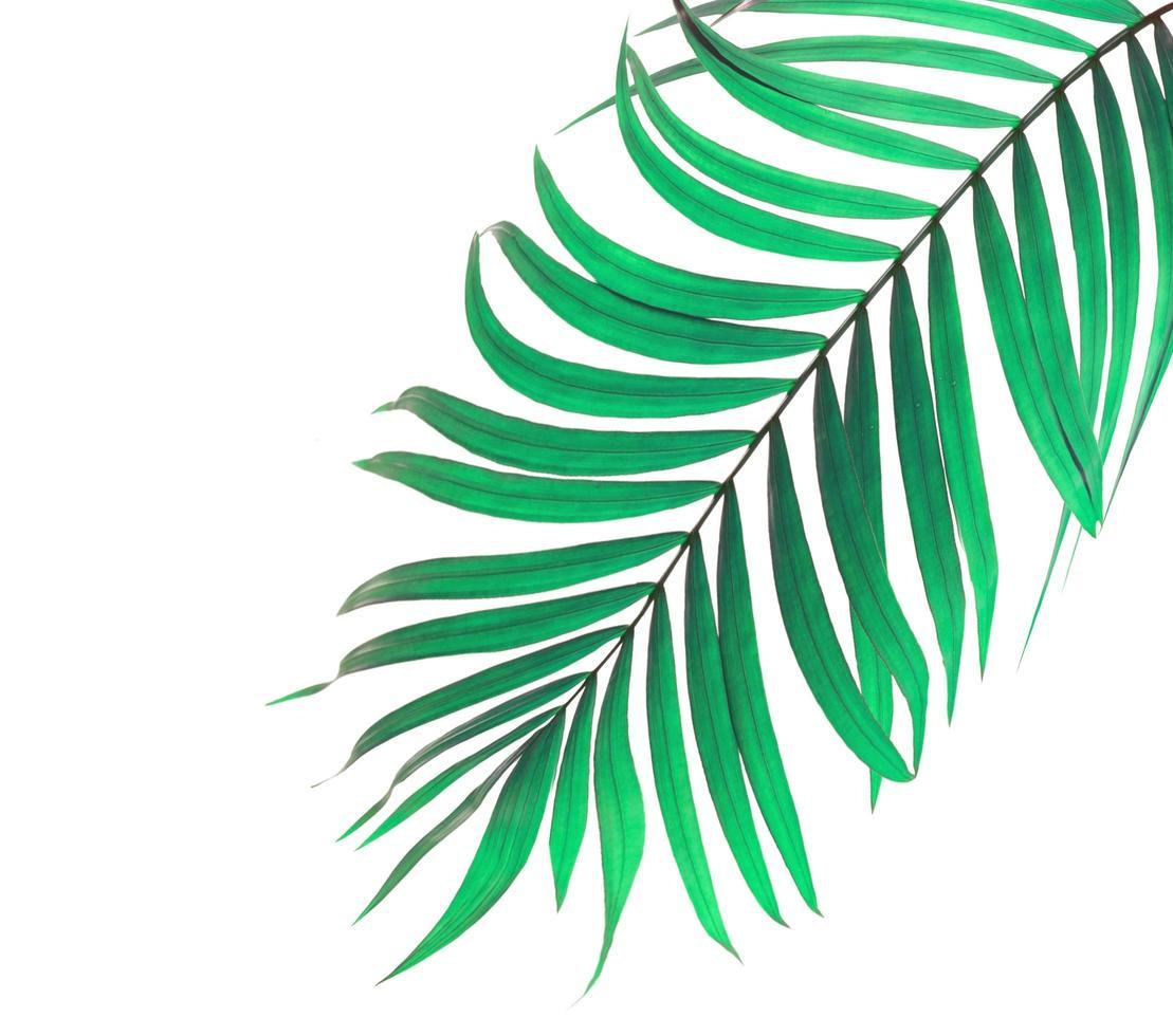 Mint green palm leaf photo