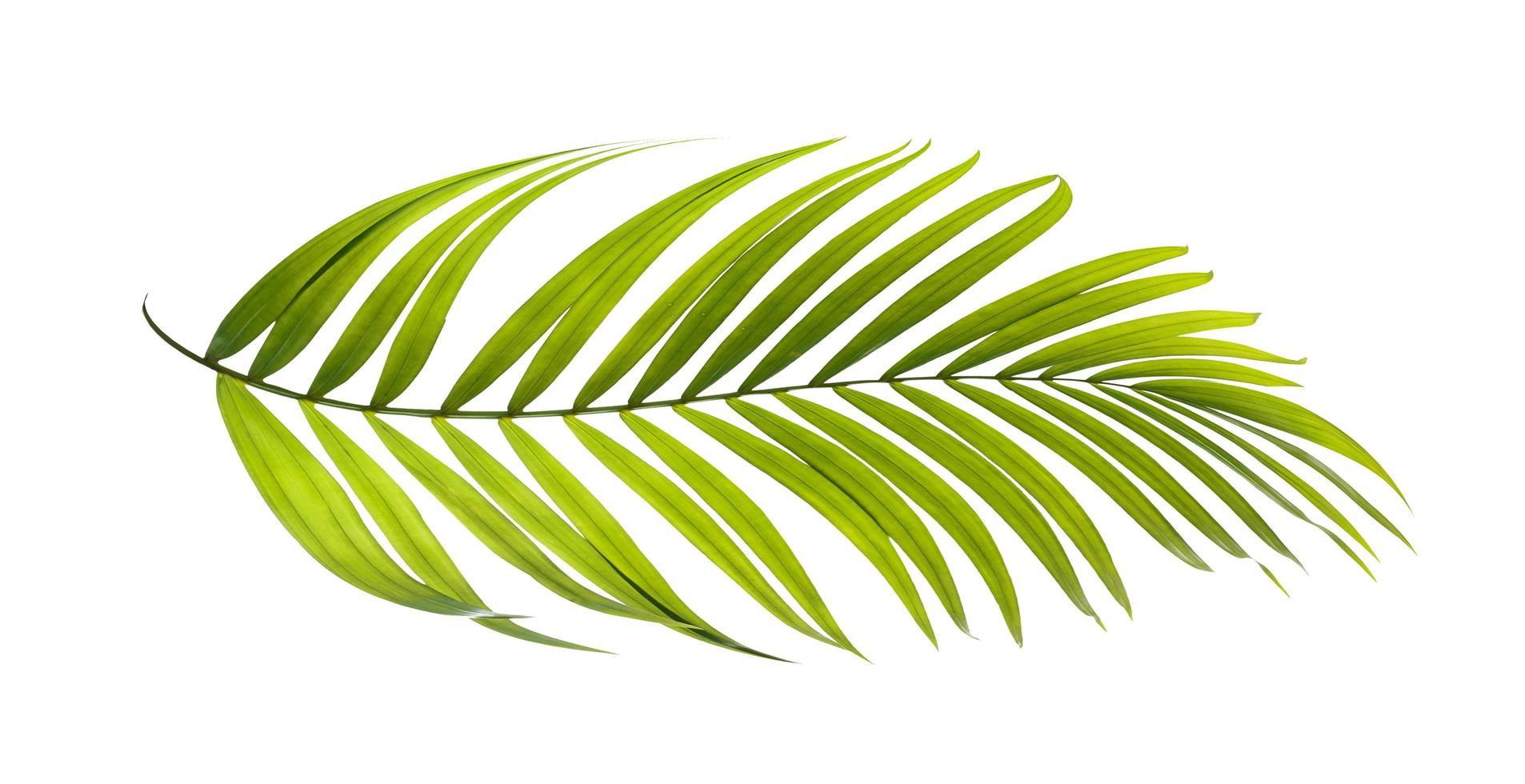 Light green leaf photo