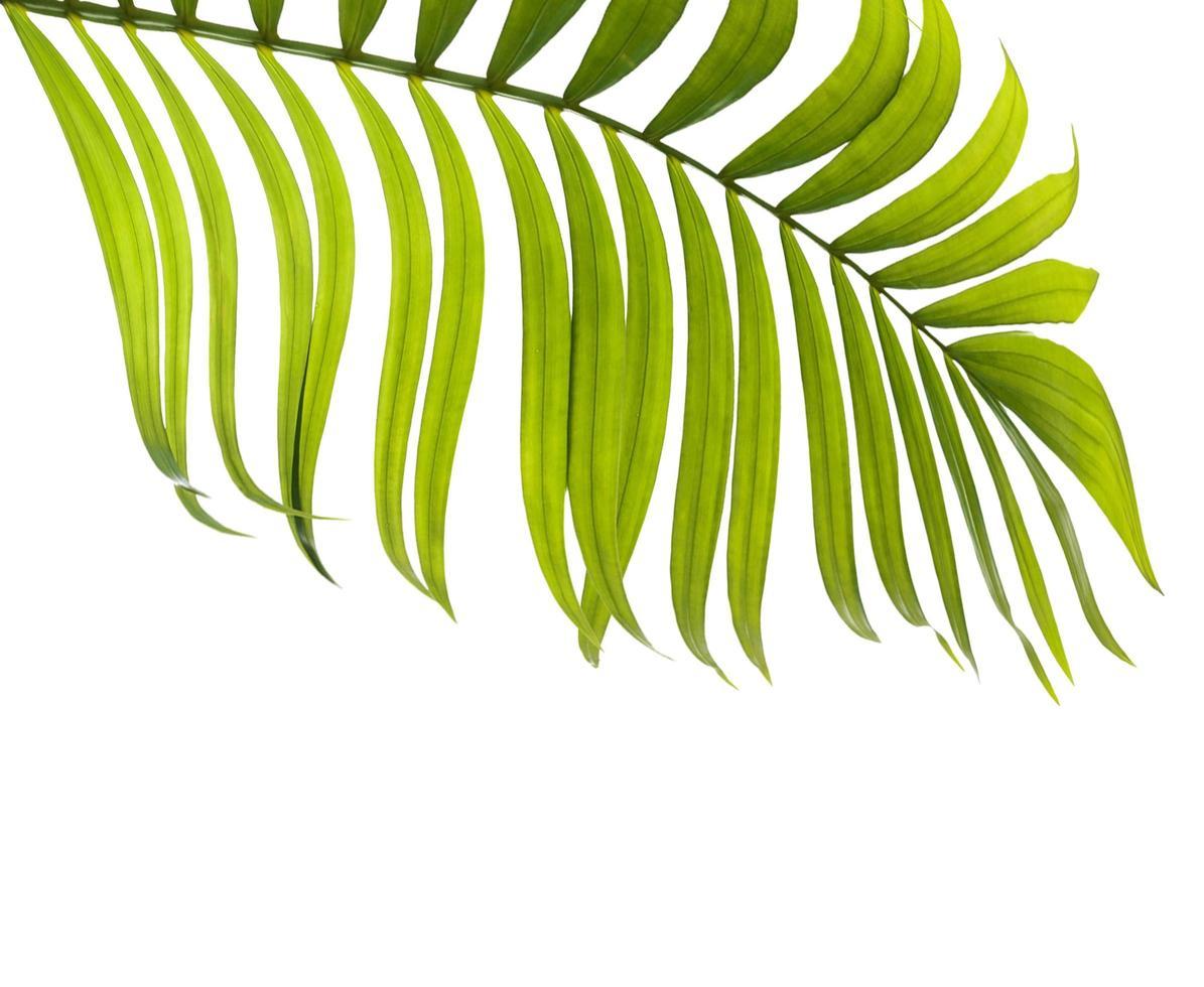 hoja verde con espacio de copia foto