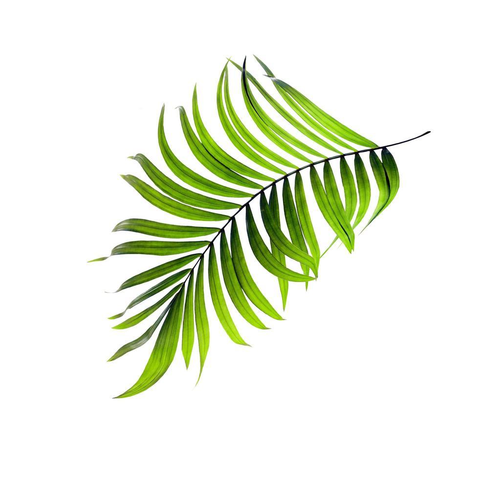 hoja tropical verde curva foto