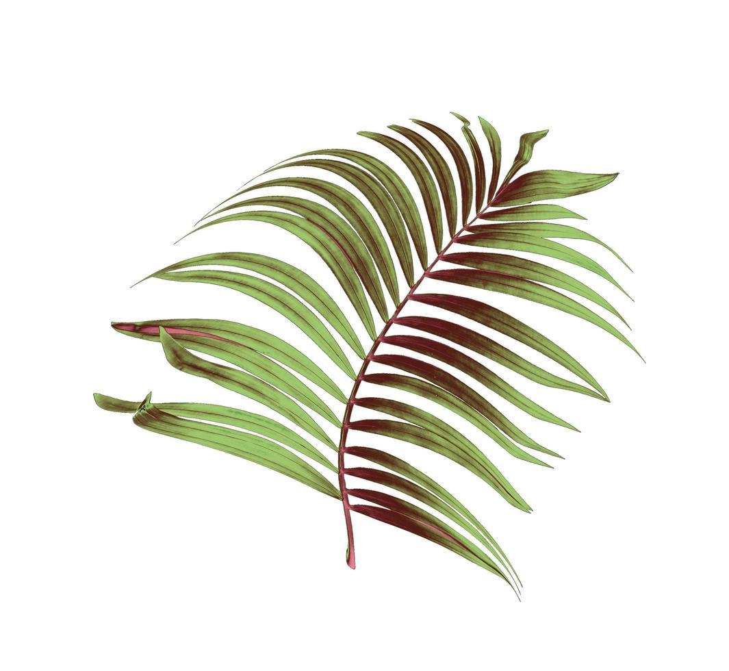una hoja de palma verde y marrón foto