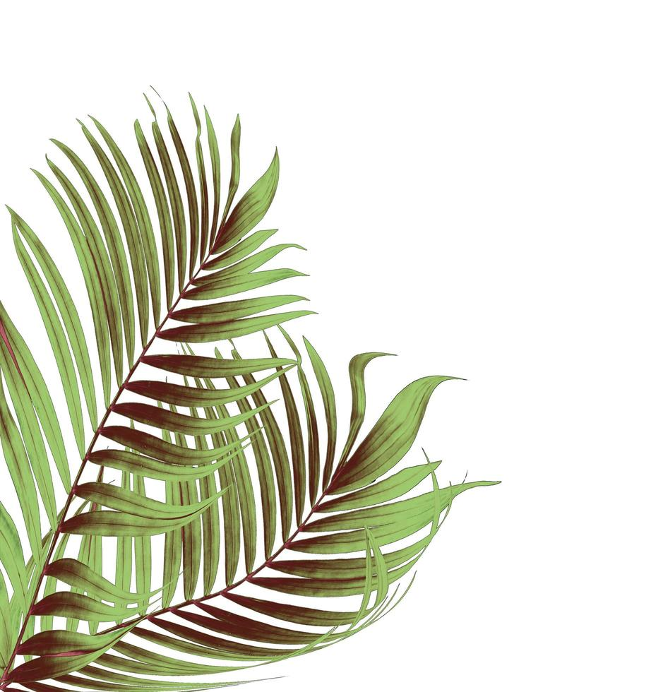 Two green and brown palm leaves photo