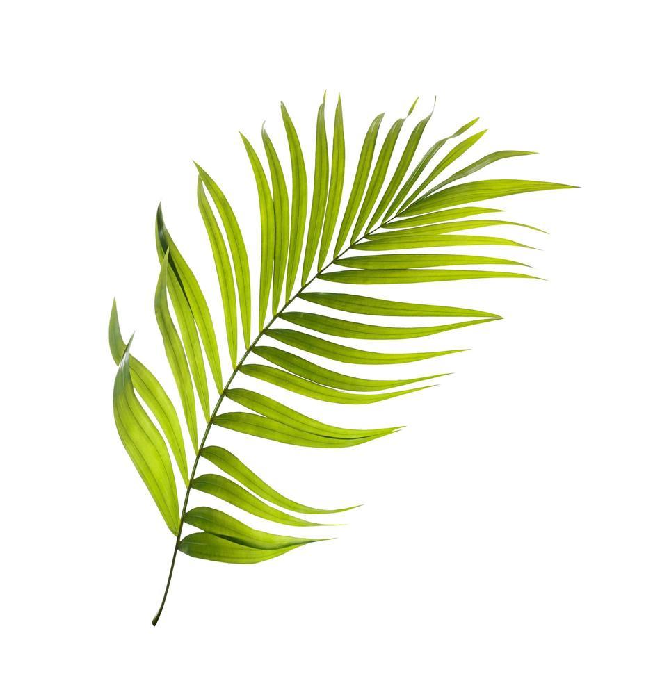Bright green leaf photo