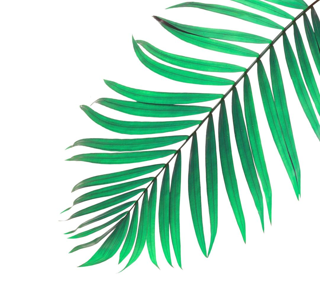 hoja tropical verde menta foto
