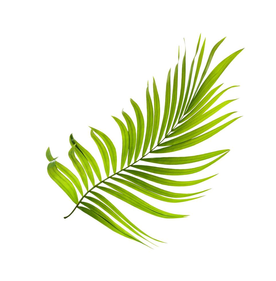 hoja tropical verde brillante foto