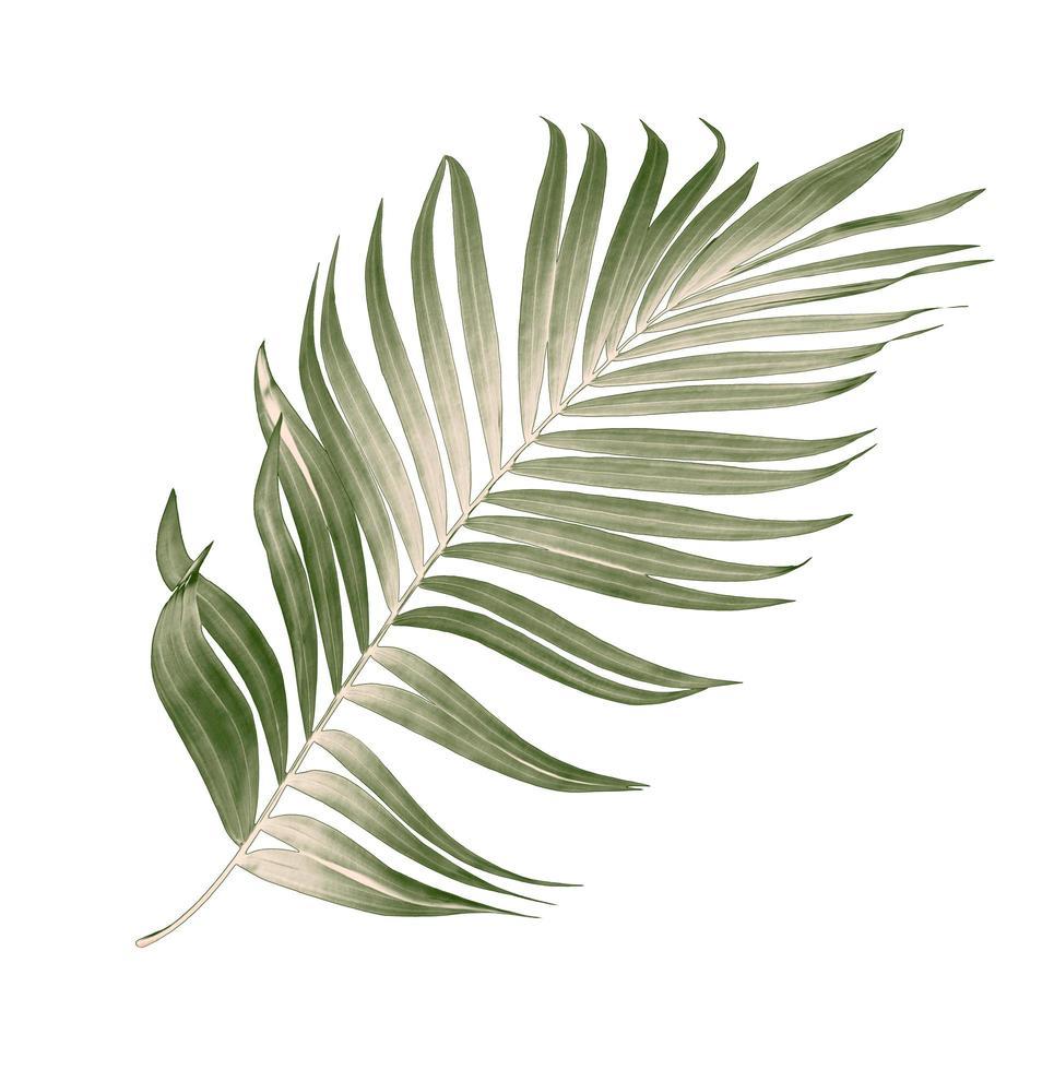 hoja de palma seca foto