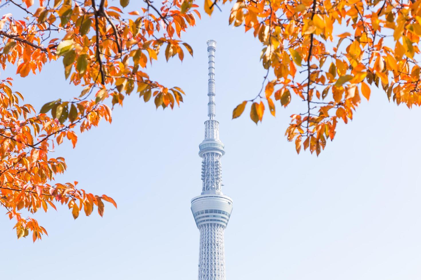 tokyo sky tree, tokio, japón - 14 de noviembre de 2016 foto