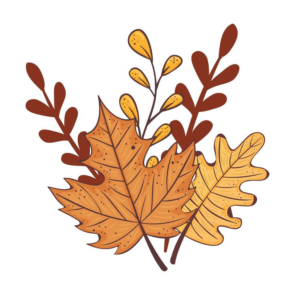 temporada de otoño hojas y ramas planta naturaleza vector