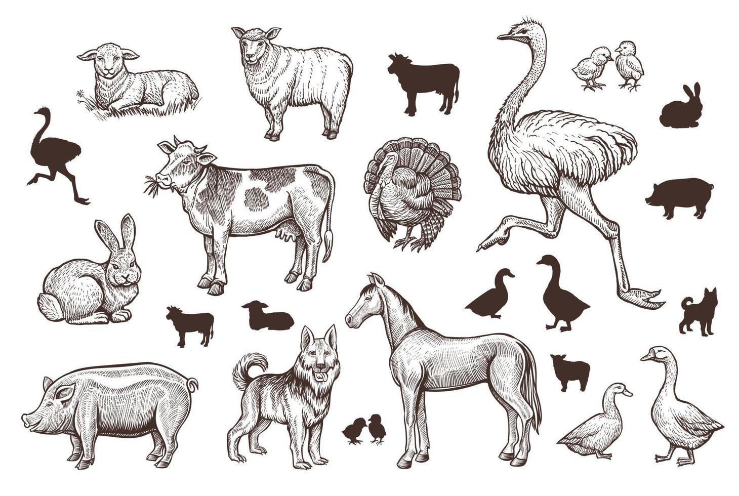 Farm Animals Vintage Set with Thin Line Sketch and Silhouettes. vector