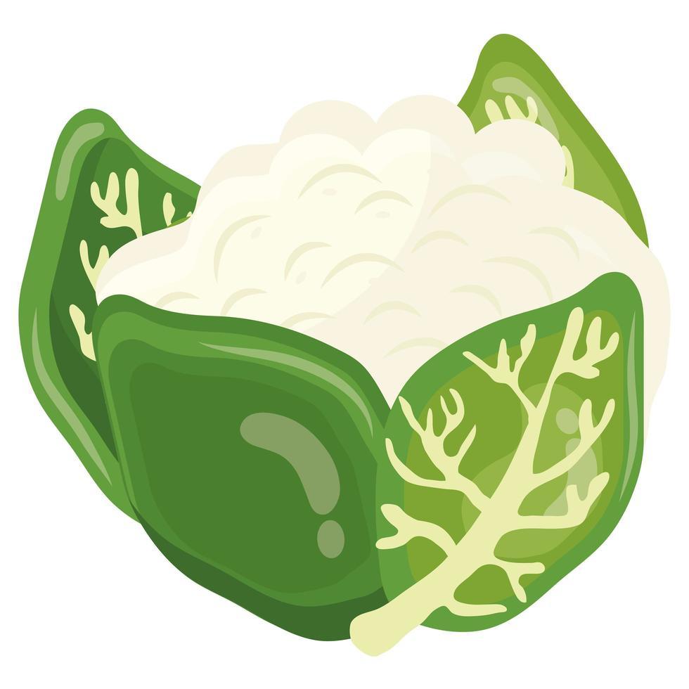 icono de comida sana de col china de verduras frescas vector