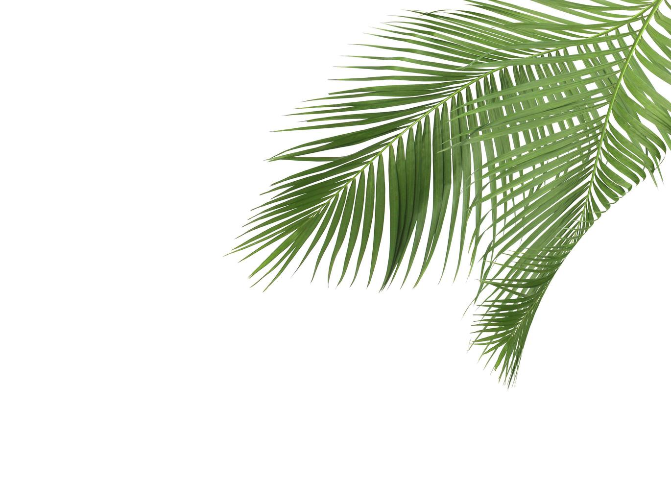 Green tropical leaves photo