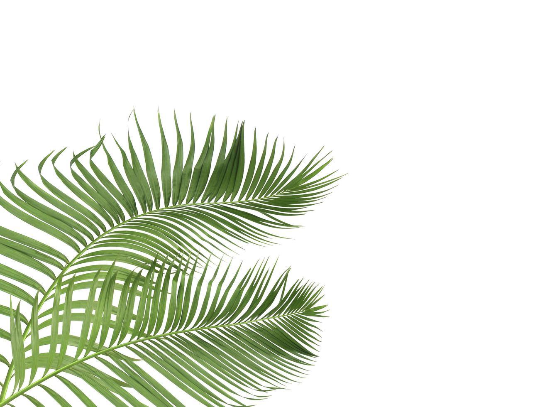 hojas verdes tropicales foto