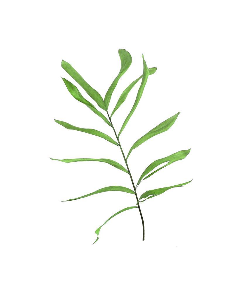 follaje de palmera verde foto