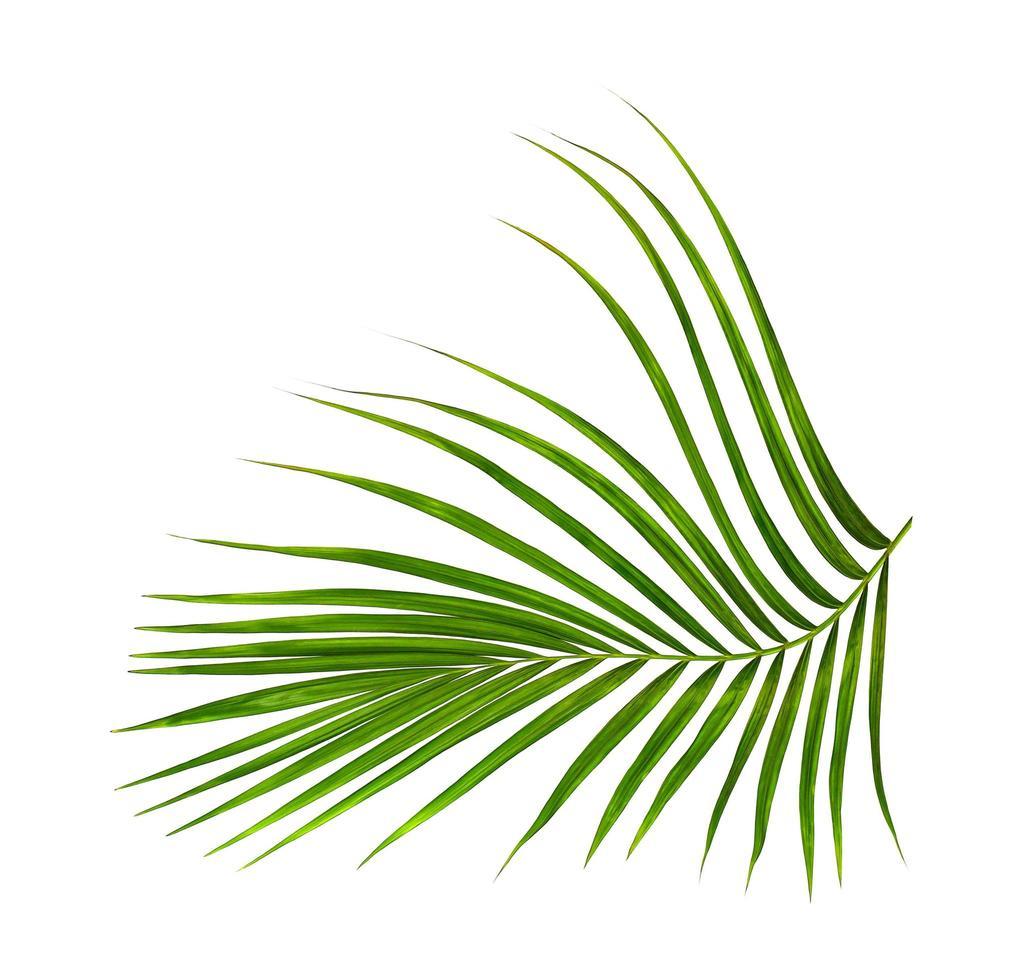 follaje verde tropical aislado sobre fondo blanco foto
