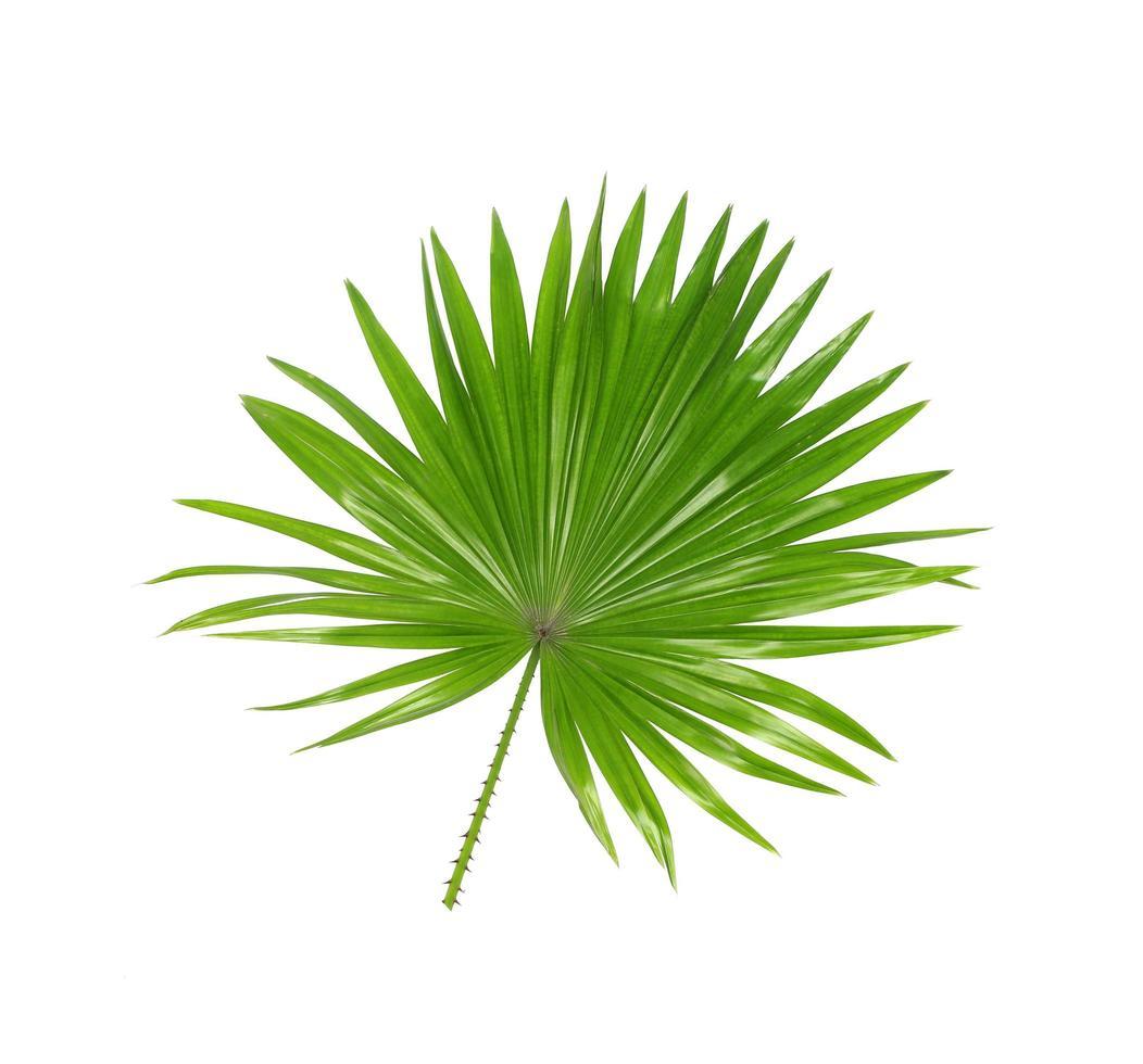 follaje tropical verde sobre blanco foto